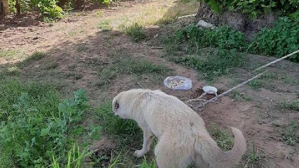 Kuyuya düşen köpeği itfaiye kurtardı