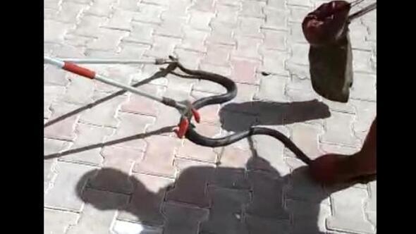 Apartmanın bodrum katında yakalanan yılan, doğaya bırakıldı