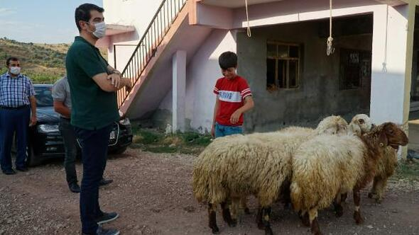 Kaymakamdan, keçileri ölen küçük Barışa hediye kuzu