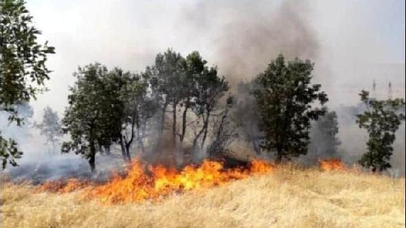 Çüngüşte 300 dönümlük alan yandı
