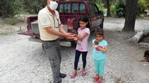 Kadirlide bulunan yavru baykuşlar korumaya alındı