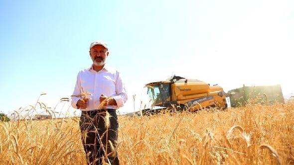 Kocasinanda siyez buğdayının hasadı başladı