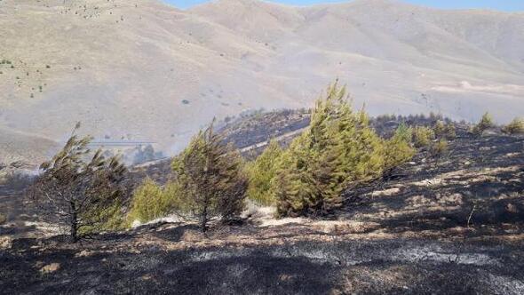 Elazığda 50 dönümlük kırsal alan yandı
