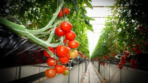 Eskişehirde sağlıklı ve güvenilir sebze üretimi