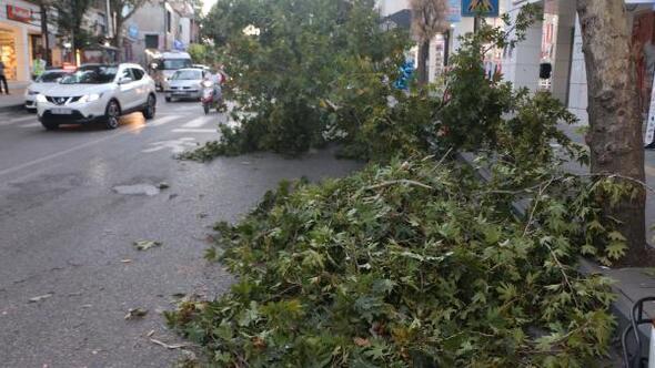 Rüzgardan devrilen ağacın dalları araçların üzerine düştü