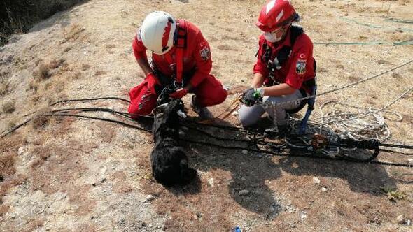 Kayalıklarda bir gün mahsur kalan yavru keçi kurtarıldı