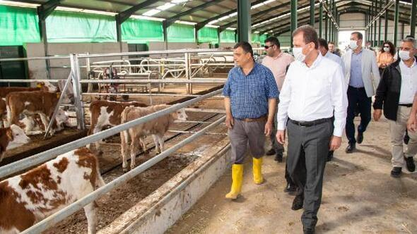 Mersin Büyükşehir'in desteği kırsaldaki üreticiye umut oluyor