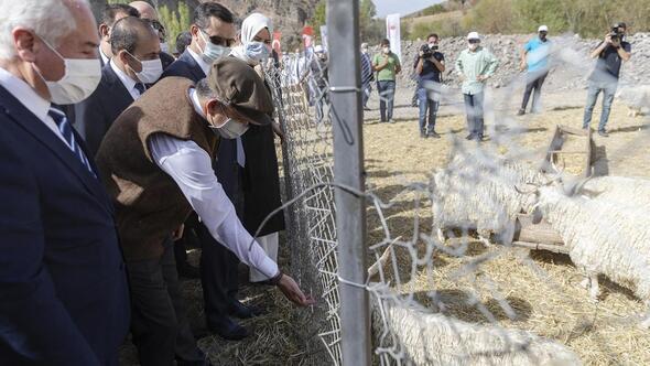 Tiftik keçisi Ankara'ya has bir zenginlik