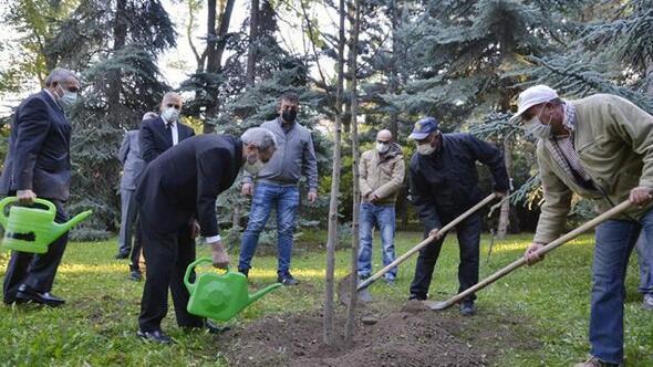 Rektörlük önüne 'İzmir Ağacı'