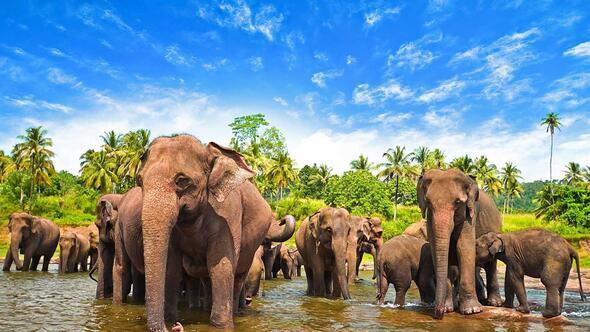 Sri Lanka'yı çevrim içi gezelim