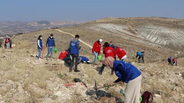 Gaziantepte 15 bin zeytin ve fıstık fidanı dikildi