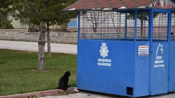 Selçuklu Belediyesi sokak hayvanları için besleme noktaları