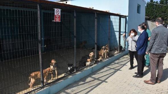 Süleymanpaşa Belediyesinden, 2 bin 540 sokak hayvanına tıbbı müdahale