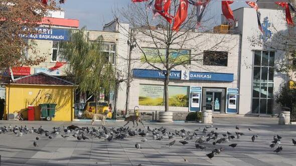 Manyasta caddeler, hayvanlara kaldı