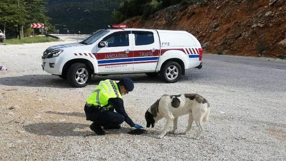 Jandarma sokak hayvanlarını unutmadı