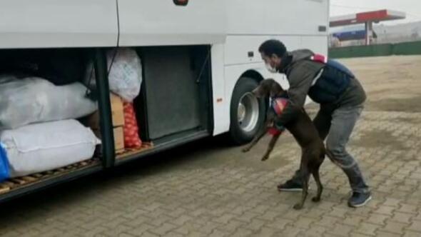 Otobüs bagajında uyuşturucuya gözaltı