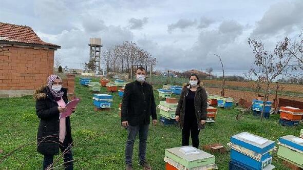Damızlık ana arı  başına 80 TL destek ödemesi yapılacak