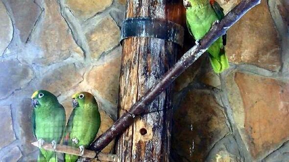 Hayvanat bahçesinde hayvanlara kaloriferli koruma