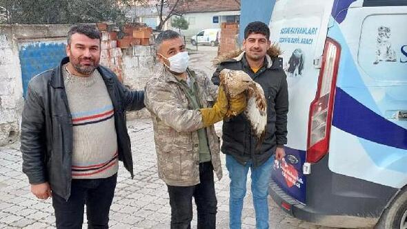 Turgutluda yaralı bulunan kızıl şahin tedaviye alındı