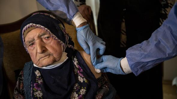 Asırlık çınarlara aşıları yapıldı