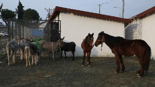 Orduda sokağa terk edilen hayvanlar koruma altında