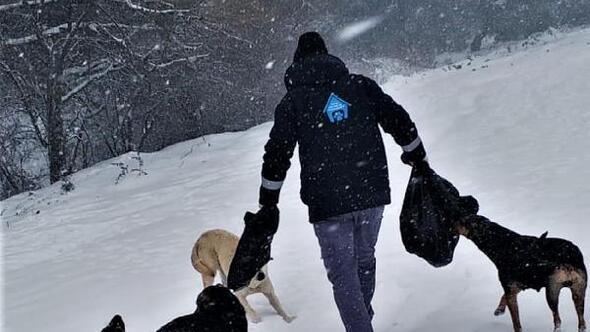 Sokaktaki canlar kara kışta yalnız kalmadı