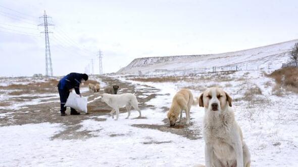 Konya Büyükşehir Belediyesi, sokak hayvanlarını unutmadı