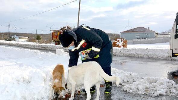 Elektrik arızasına giden ekiplerden sokak hayvanlarına mama desteği