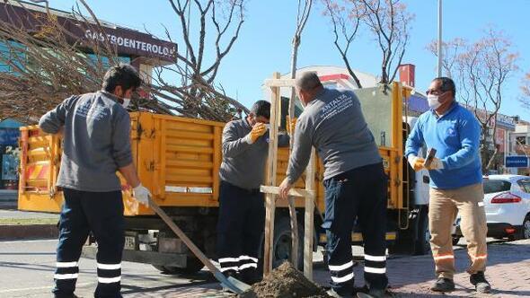 Büyükşehir caddeleri ağaçlandırıyor