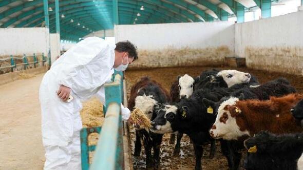 Eskişehirden Azerbaycan'a canlı hayvan ihracatı
