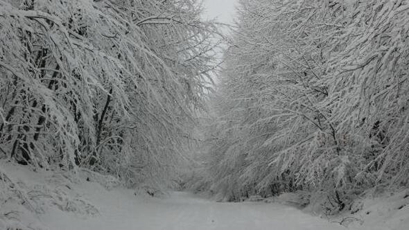 Bartında milli parkta kar güzelliği