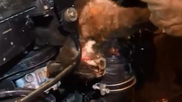 Bucakta otomobilin motor kısmına sıkışan kedi kurtarıldı