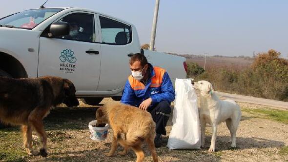 Nilüfer Belediyesi, pandemi sürecinde yaklaşık 30 bin kilogram mama dağıttı
