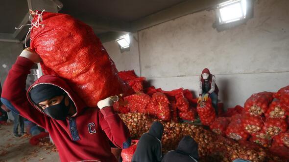 Polatlı soğanı 81 ilde dağıtılacak