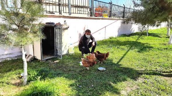 Okul bahçesine tavuk kümesi kurdular