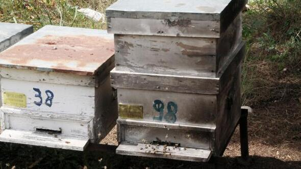 Arı kovanlarının yakılmak istendiği iddiası