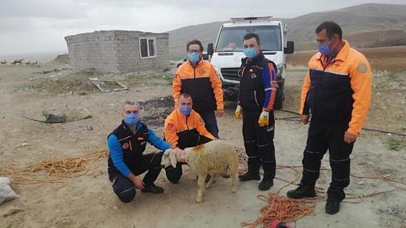 Kuyuya düşen kuzuyu AFAD ekipleri kurtardı