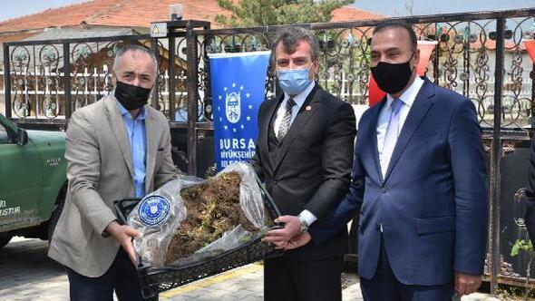 Bursa Büyükşehir Belediyesinden çiftçilere fidan desteği