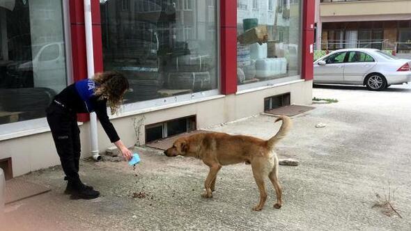 Sarayda sokak hayvanlarını zabıta besledi