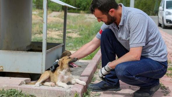 Meram Belediyesi sokak hayvanları için yapılan besleme noktalarına mama bıraktı