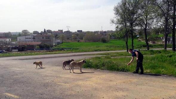 Süleymanpaşada sokak hayvanlarını zabıta ekipleri besliyor