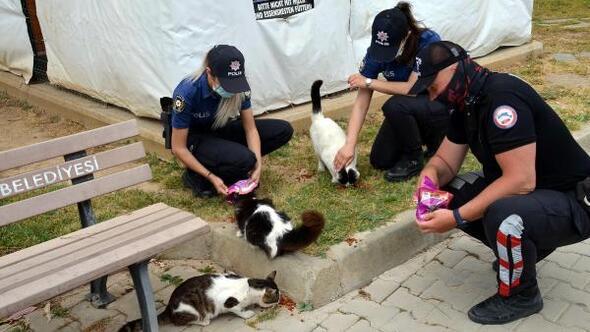 Pandemide sokak hayvanları unutulmadı