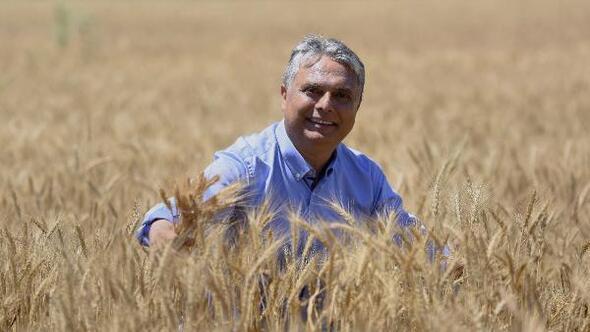 Antalyanın kalbinde sapsarı buğday tarlası