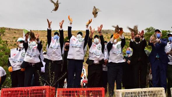Malatyada doğaya 30 bin keklik salındı