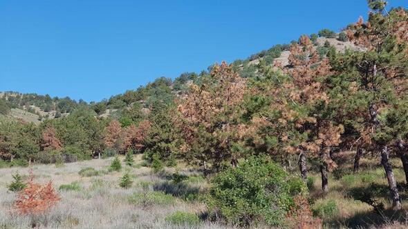 Ağaçlar acilen tedavi edilmeli