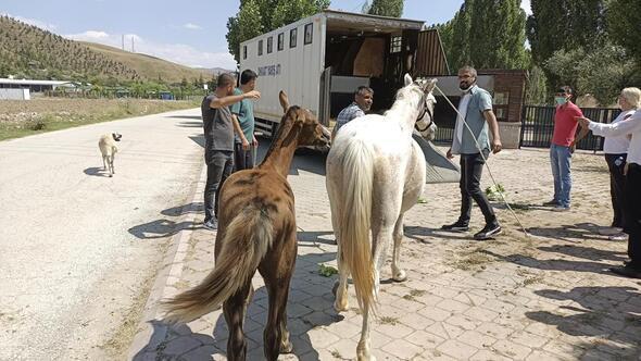 At başına 500 TL ceza