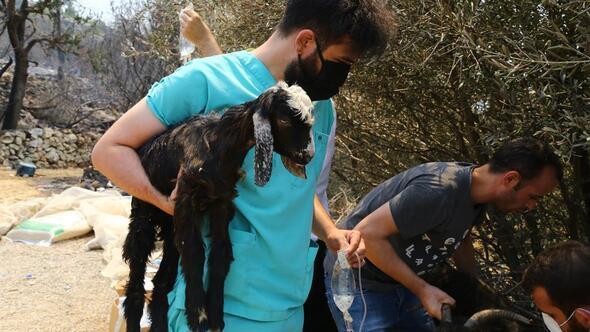 Gönüllü veterinerler zamanla yarışıyor