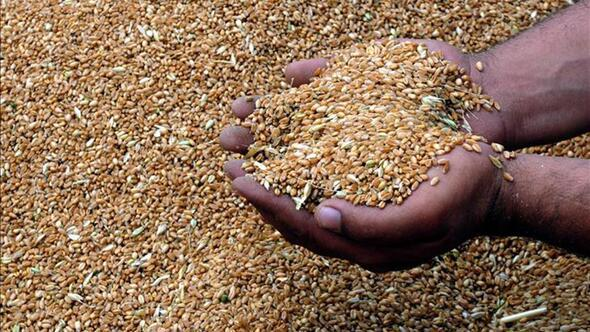 ABB'den çiftçiye tohum desteği