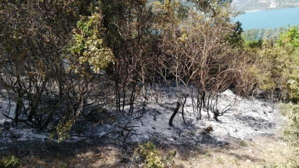 Adana'da gece çıkan orman yangını bu sabah söndürüldü