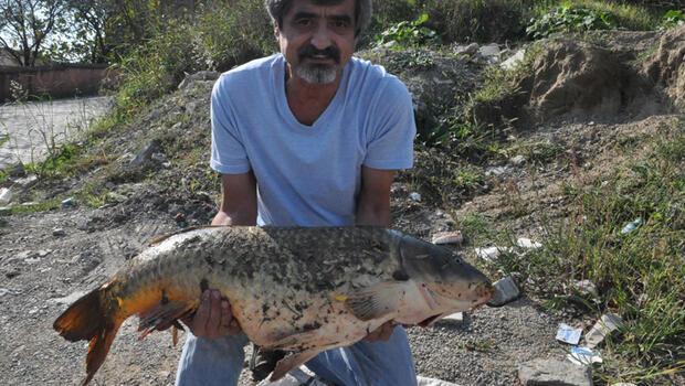 Bartın Irmağı'nda 16 kiloluk sazan yakaladı